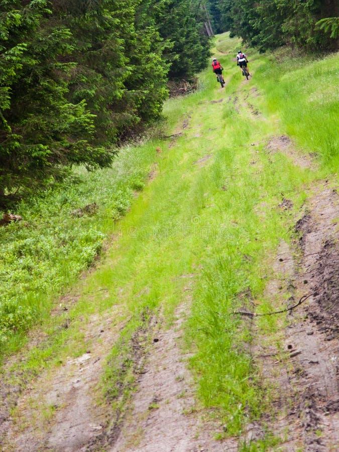 两个骑自行车者在绿色森林里 免版税库存图片