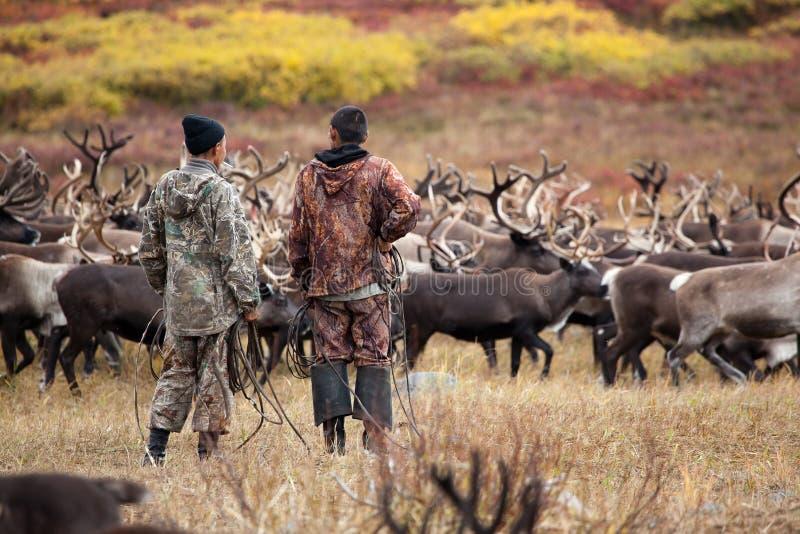 两位不可能验明的埃文基驯鹿牧民牧人牛仔站立并且观看驯鹿牧群  图库摄影