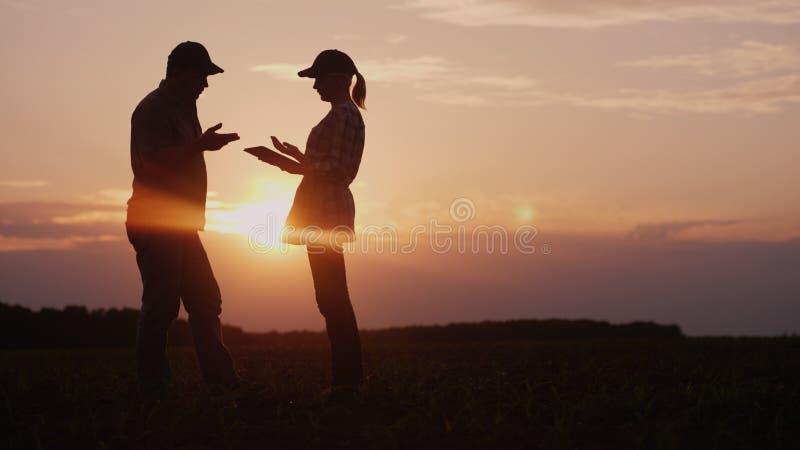两位农夫在领域工作在晚上在日落 男人和妇女谈论某事,使用片剂 库存图片