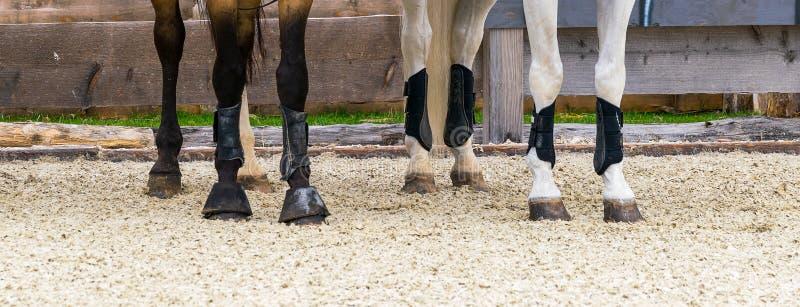 两匹带脚踝保护器的马 免版税库存图片