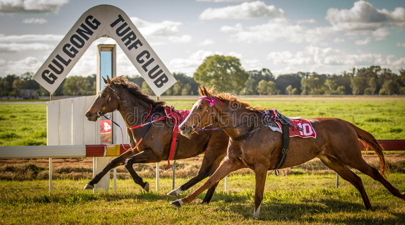 两匹赛马赛跑,不用骑师在Gulgong NS 免版税库存图片