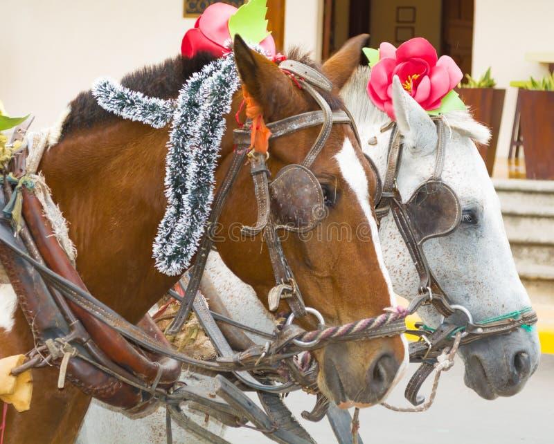 两匹马在街上行走 库存图片