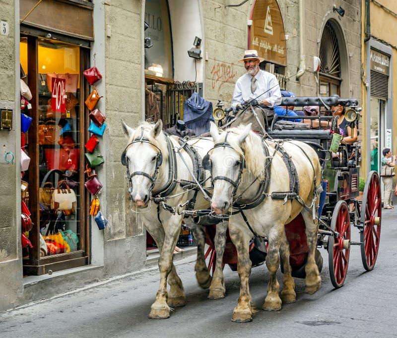 两匹Percheron马得出的支架在佛罗伦萨,意大利 图库摄影