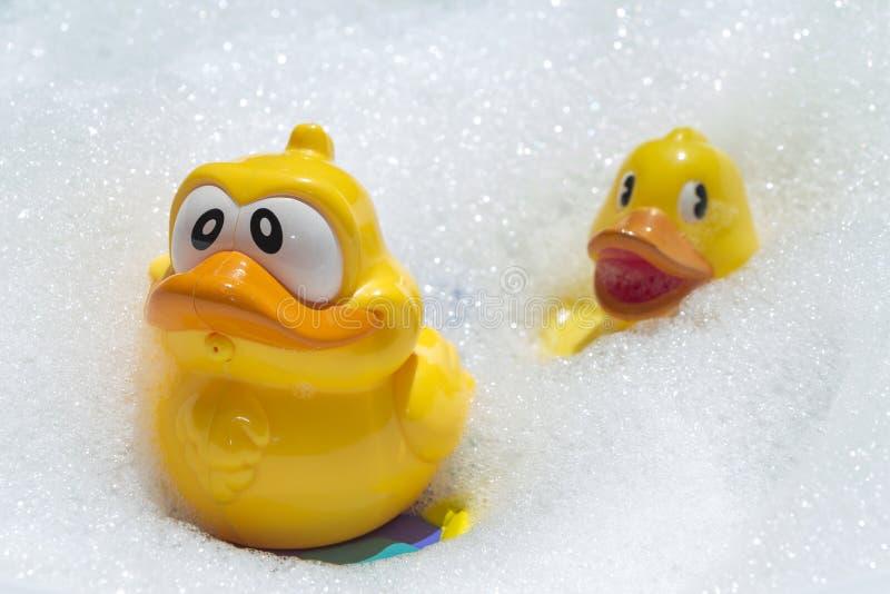 两只在soapsuds的黄色鸭子游泳 库存图片