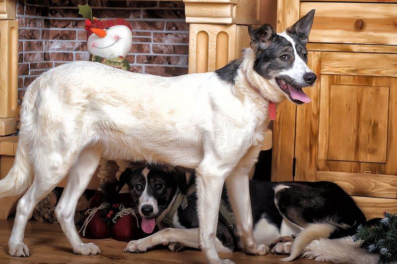 两只小狗由壁炉的六个月 免版税图库摄影