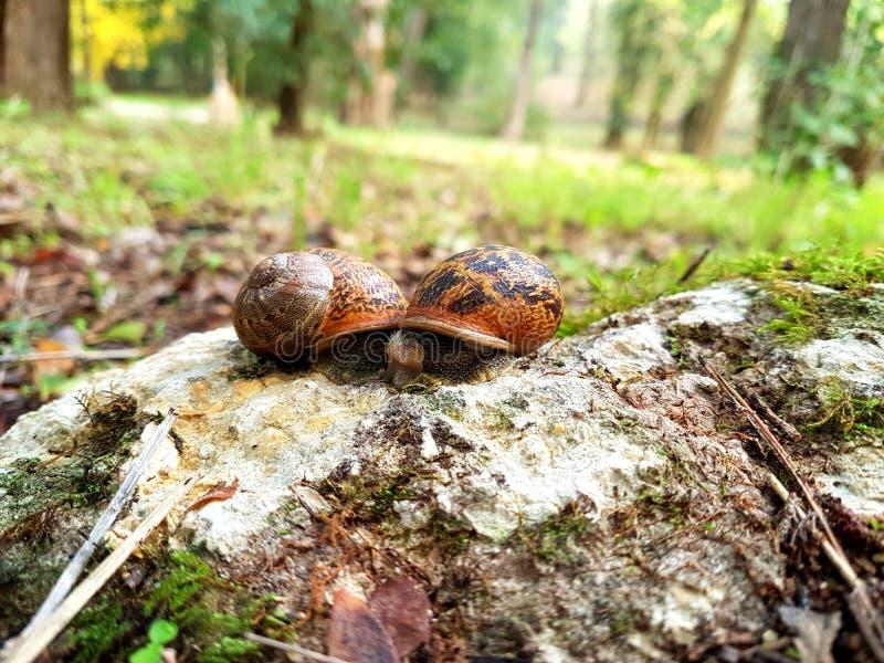 两只小的蜗牛 图库摄影