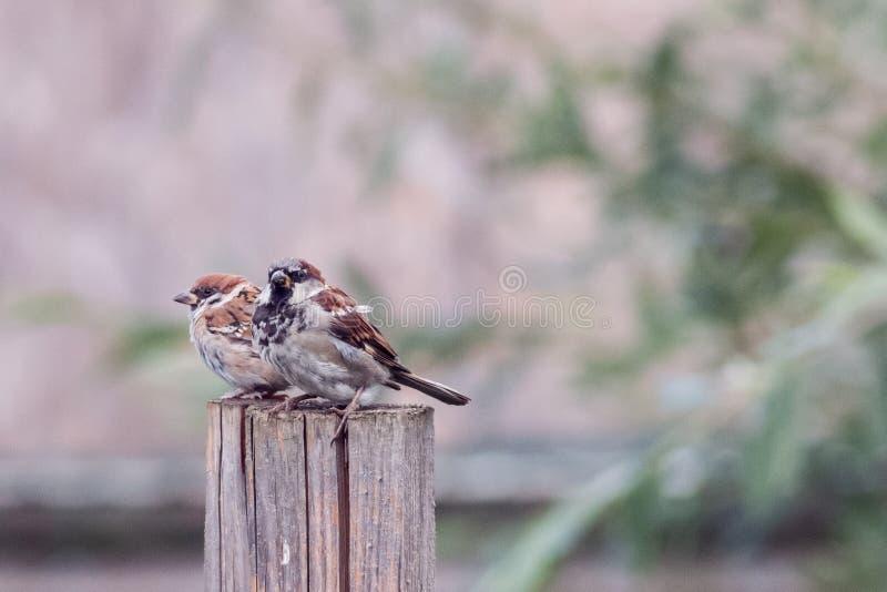 两只小的鸟 免版税库存图片