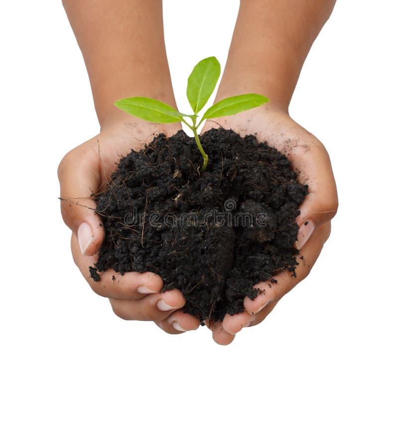 两只手举行和关心年轻绿色植物/种植树/ 免版税库存图片