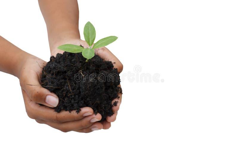 两只手举行和关心年轻绿色植物/种植树/ 库存照片