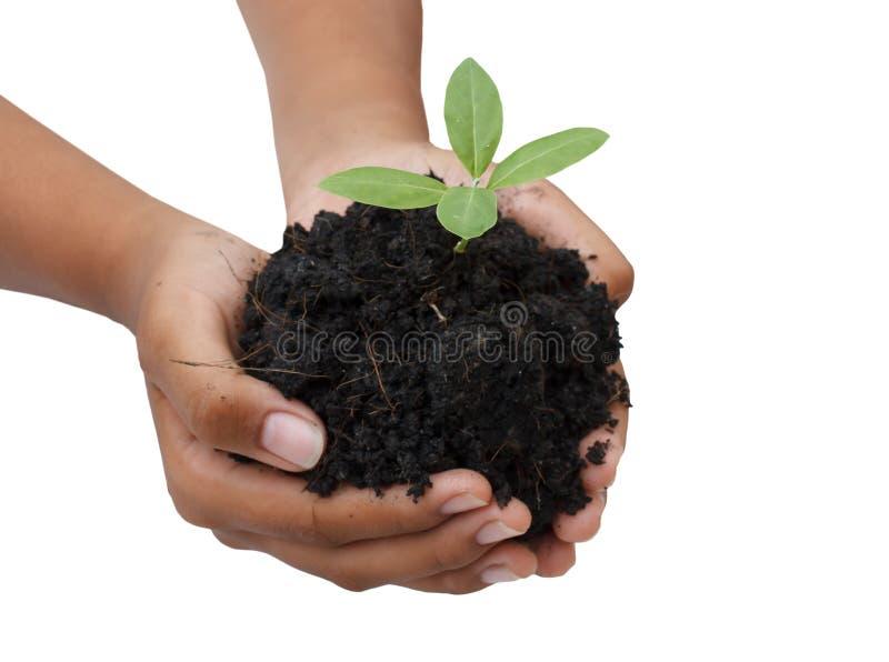 两只手举行和关心年轻绿色植物/种植树/ 免版税图库摄影