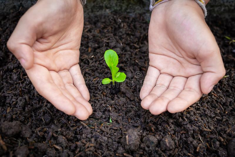 两只手照顾绿色幼木 图库摄影
