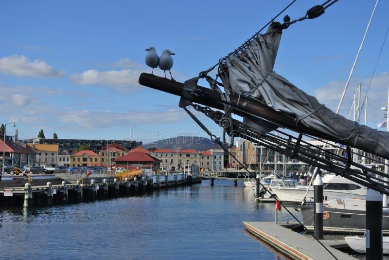 两只海鸥坐风船帆柱在霍巴特塔斯马尼亚澳大利亚 免版税库存图片