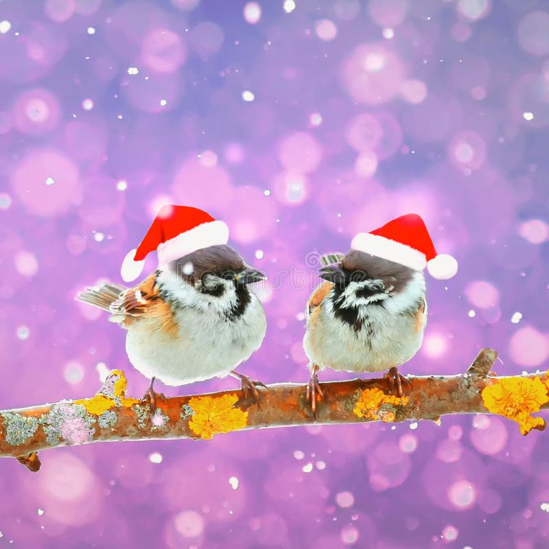 两只滑稽的鸟坐一个分支在雪的冬天在稀土 库存图片