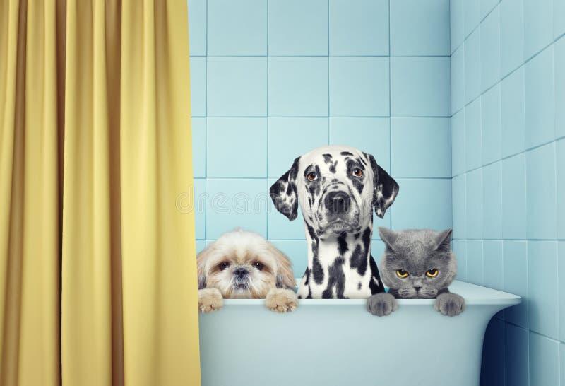 两只狗和猫在浴 免版税库存图片
