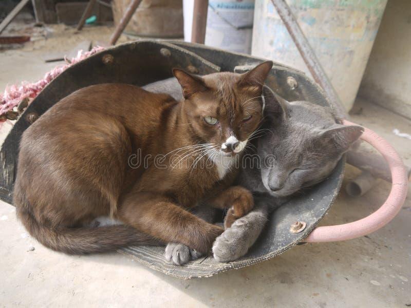 两只猫一起睡觉 库存照片