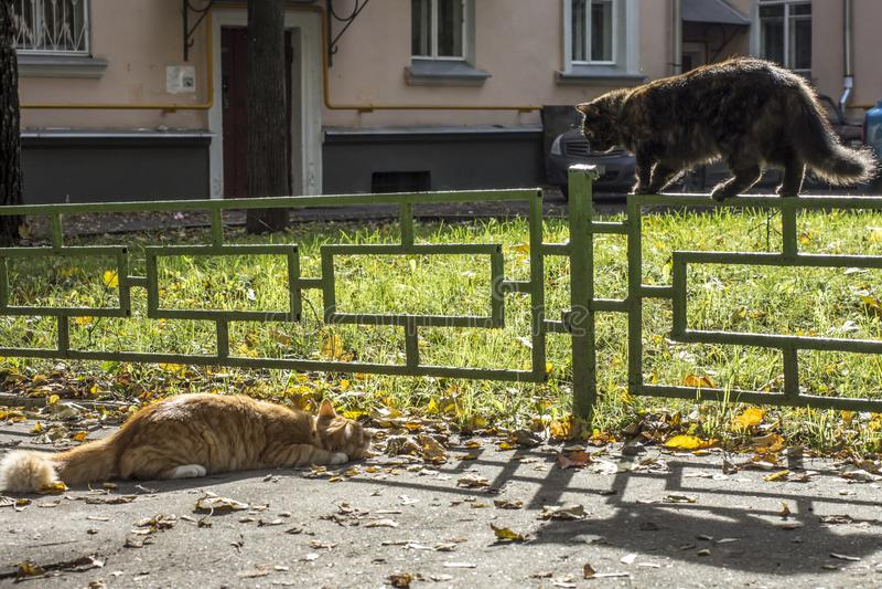 两只猫互相使用在太阳天 库存照片