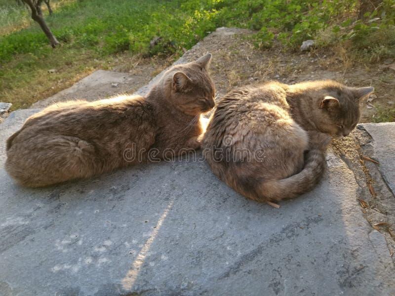 两只猫说谎的睡觉 库存图片