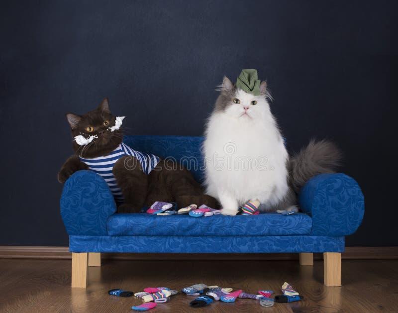 两只猫选择袜子坐长沙发 免版税库存照片