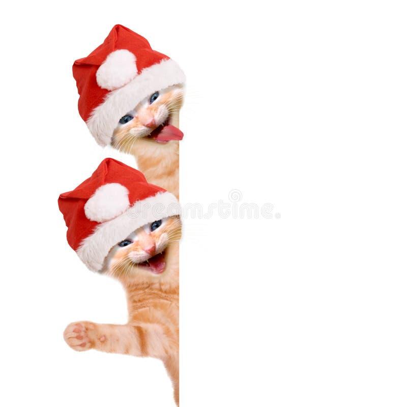 两只猫,笑和挥动与圣诞节帽子 库存照片