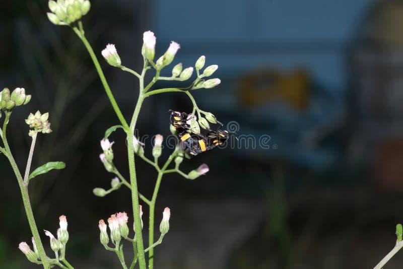 两只蝴蝶联接 免版税库存照片