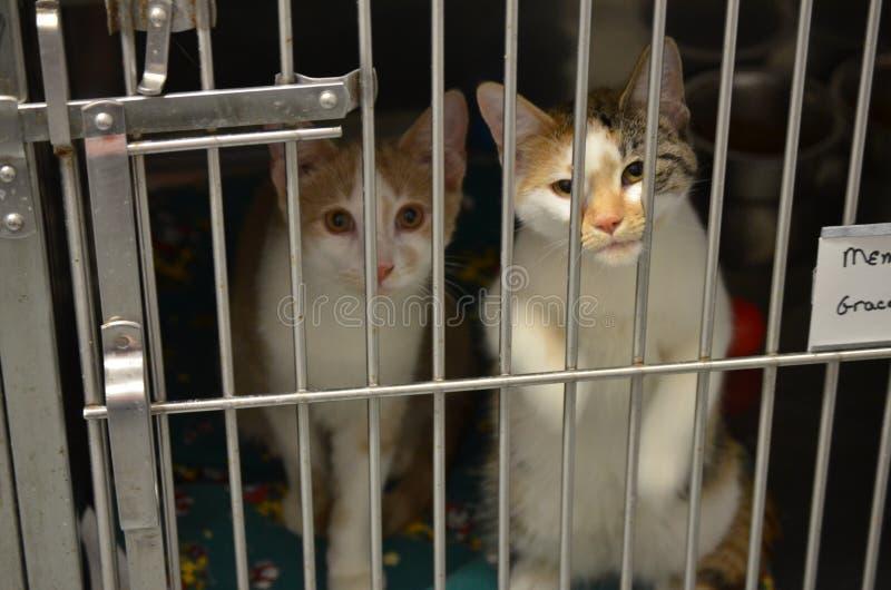 两只逗人喜爱的小的风雨棚小猫 免版税库存照片