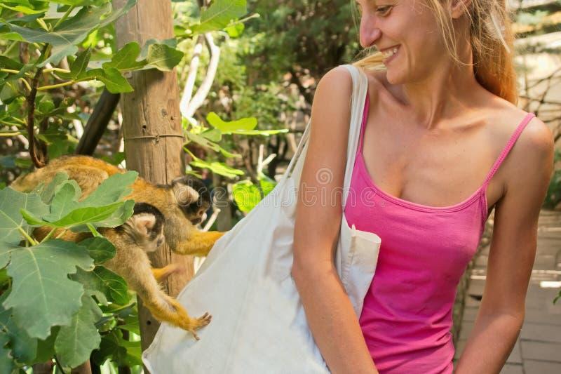 两只逗人喜爱的小的猴子检查女孩的袋子 免版税库存照片
