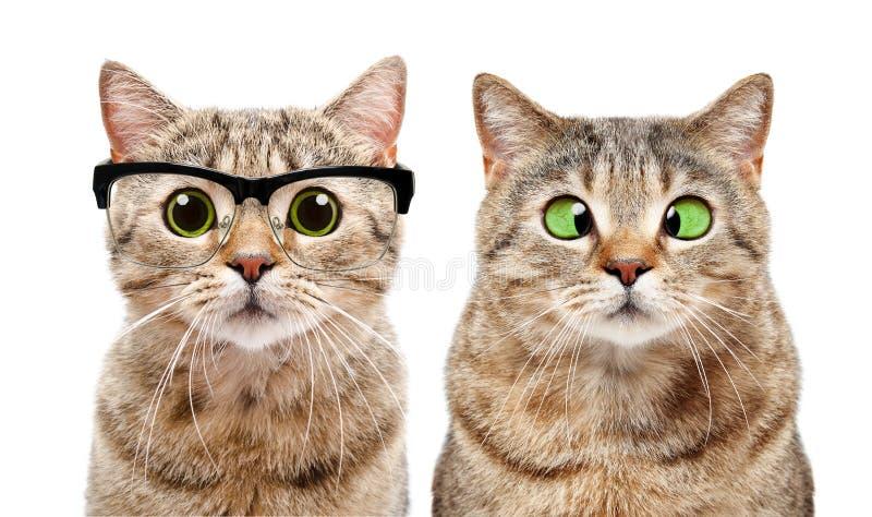 两只逗人喜爱的猫画象以眼病 免版税库存照片