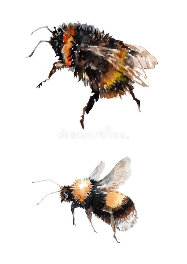 两只飞行的土蜂 在白色背景的水彩 皇族释放例证