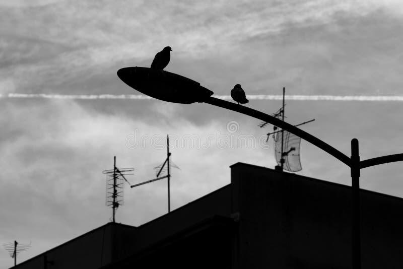 两只鸟剪影在街道波兰人上的 图库摄影