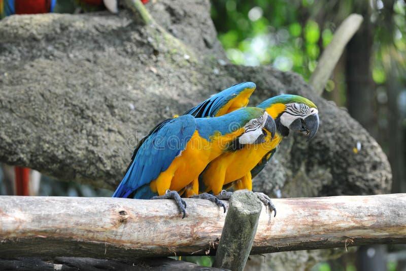 Download 两只鹦鹉鸟 库存图片. 图片 包括有 马眼罩, 鹦鹉, 查找, 宠物, 结构, 立场, 暂挂, 飞行, 眼睛 - 30329771