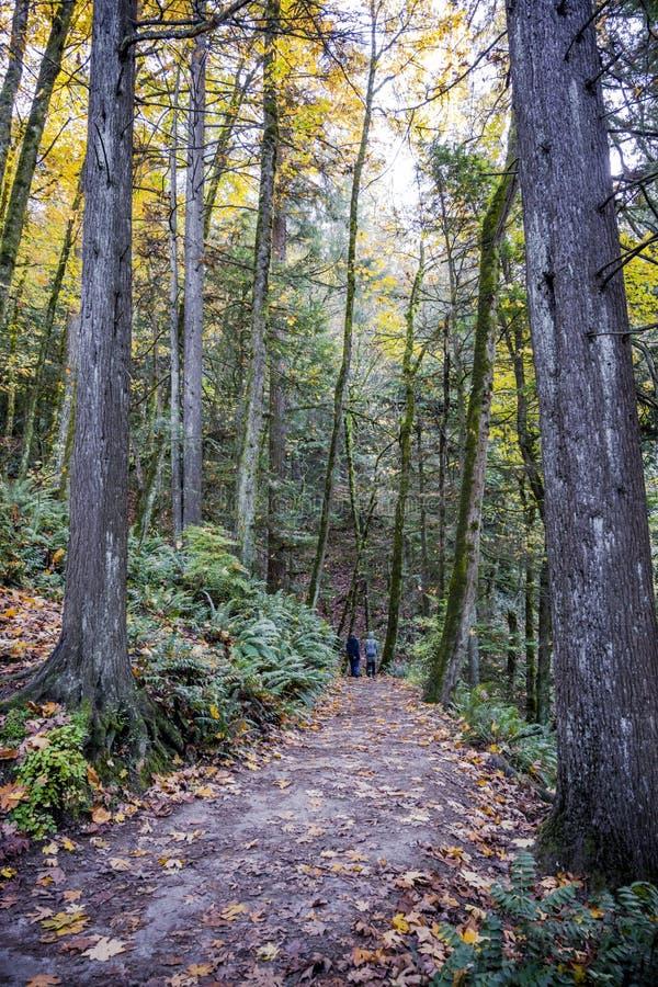 两名妇女沿呼吸在新鲜的健康空气的秋天森林道路走 免版税库存图片