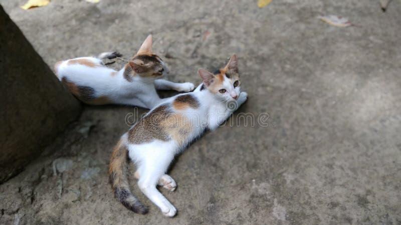 两在地面上的逗人喜爱的小猫 免版税库存照片