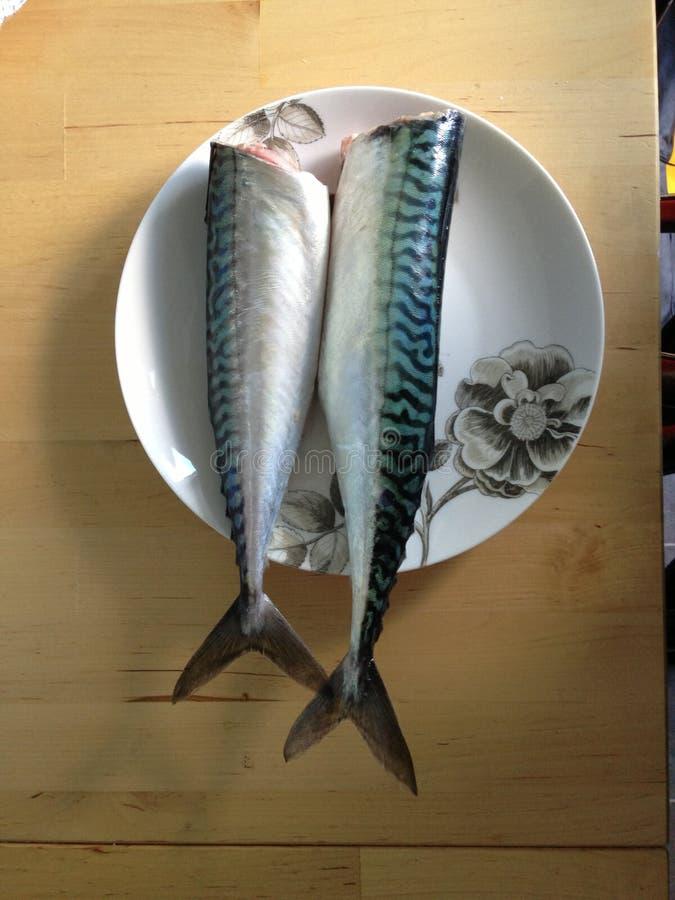 两在板材的无首的鲭鱼 图库摄影