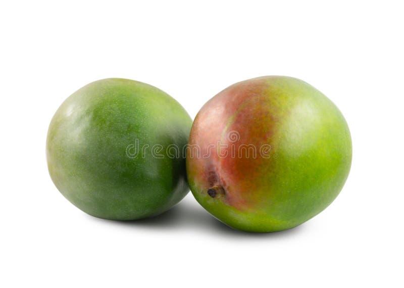 两在白色背景隔绝的芒果 库存图片