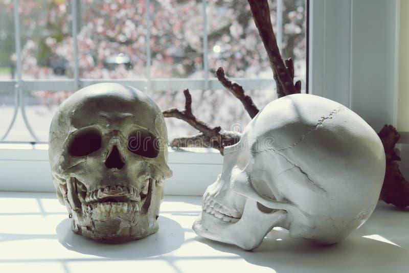 两块头骨和一个树枝在窗台 库存照片