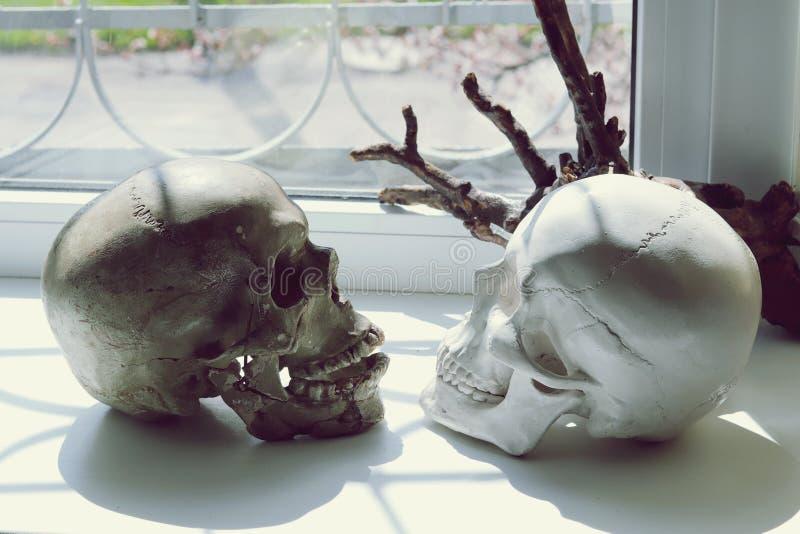 两块头骨和一个树枝在窗台 库存图片