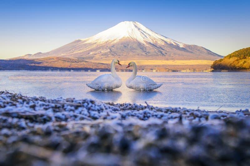两天鹅在Yamanaka湖有富士山背景 免版税库存照片