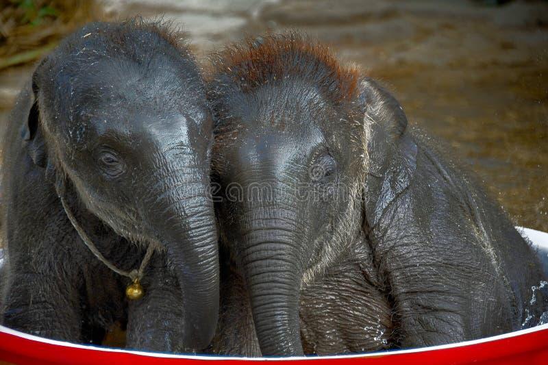 两头逗人喜爱的大象-我和一起您 免版税库存照片
