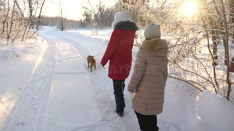 两女孩和狗和狗步行沿道路在冬天公园 与狗的儿童游戏在雪在冬天在愉快的森林里 库存照片