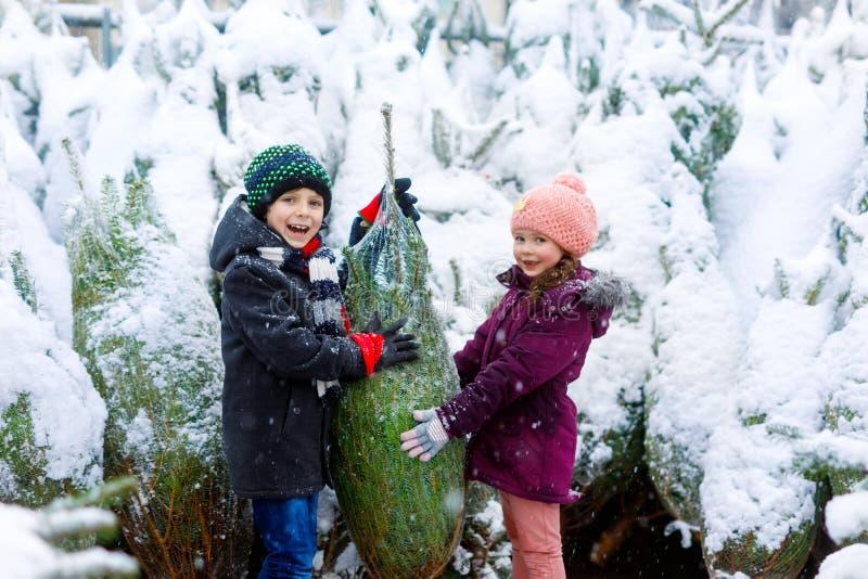 两小兄弟姐妹哄骗拿着圣诞树的男孩和女孩 愉快的孩子在冬天给选择和买的xmas穿衣 免版税图库摄影