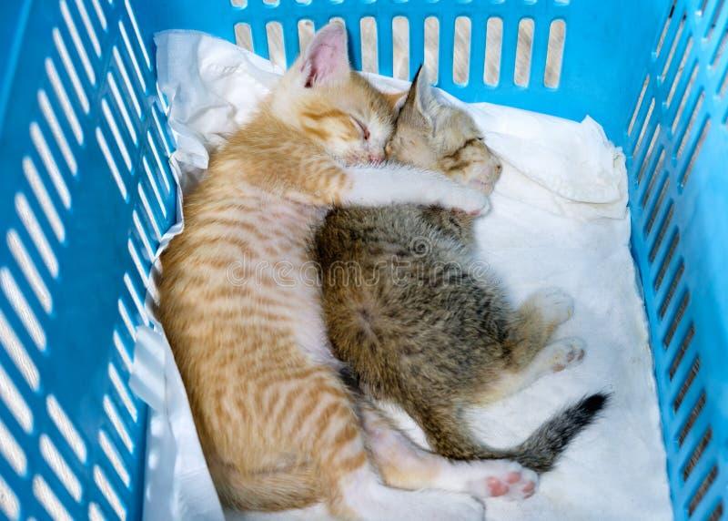 两小猫是有睡觉的兄弟姐妹并且拥抱在篮子 免版税库存图片