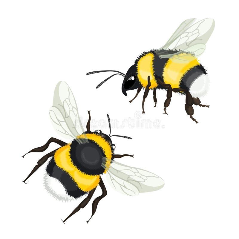 两弄糟与飞行传染媒介例证的翼的蜂 向量例证