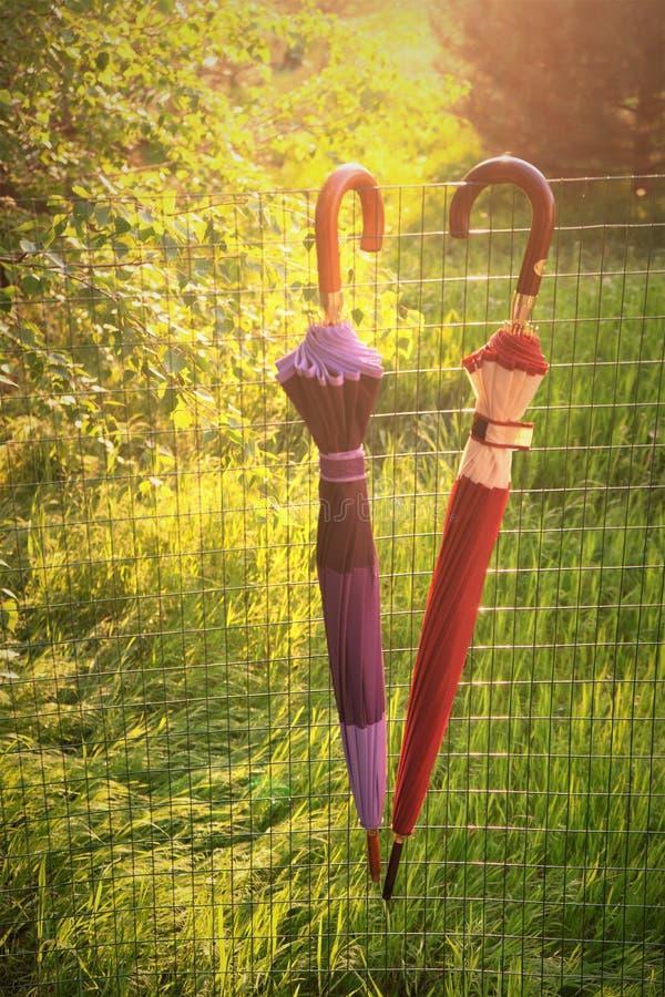 两把被关闭的伞在篱芭垂悬在春天庭院 免版税图库摄影