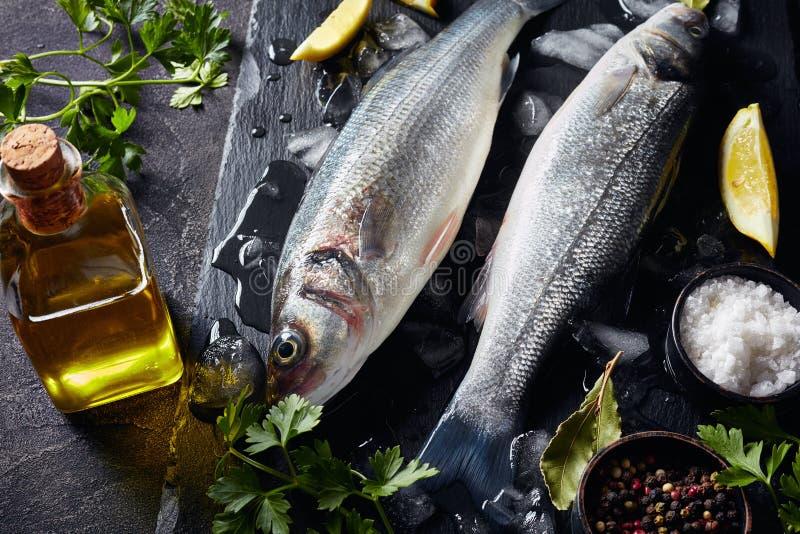 两未加工的整个鲈鱼特写镜头  免版税库存照片