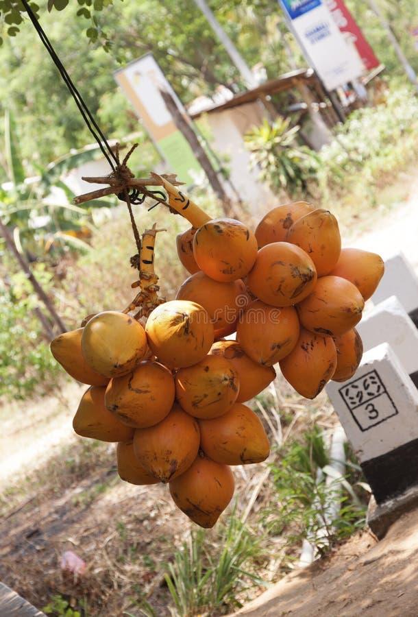两束橙色国王椰子准备好待售在sr的路附近 免版税图库摄影