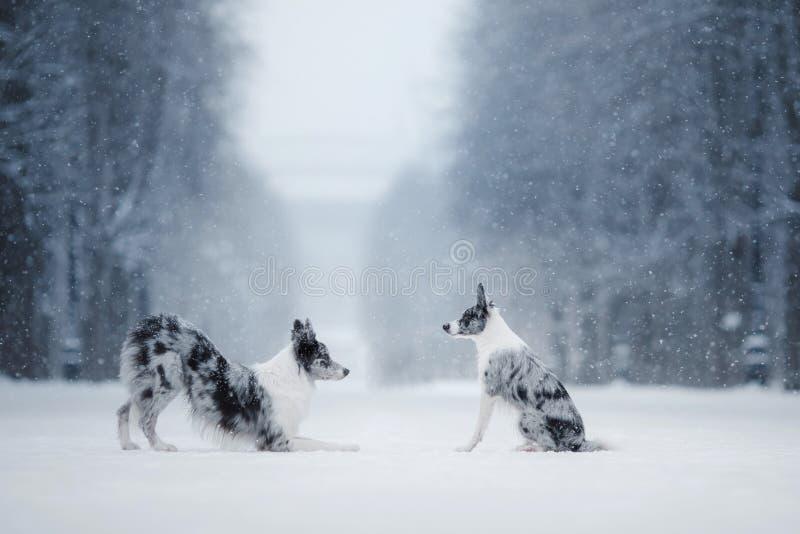 两条狗一起,在自然的友谊在冬天 库存照片