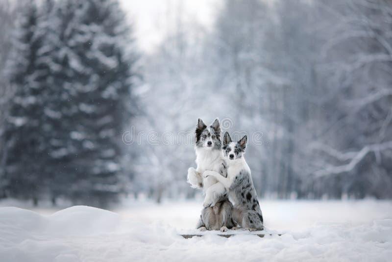 两条狗一起,在自然的友谊在冬天 免版税库存照片