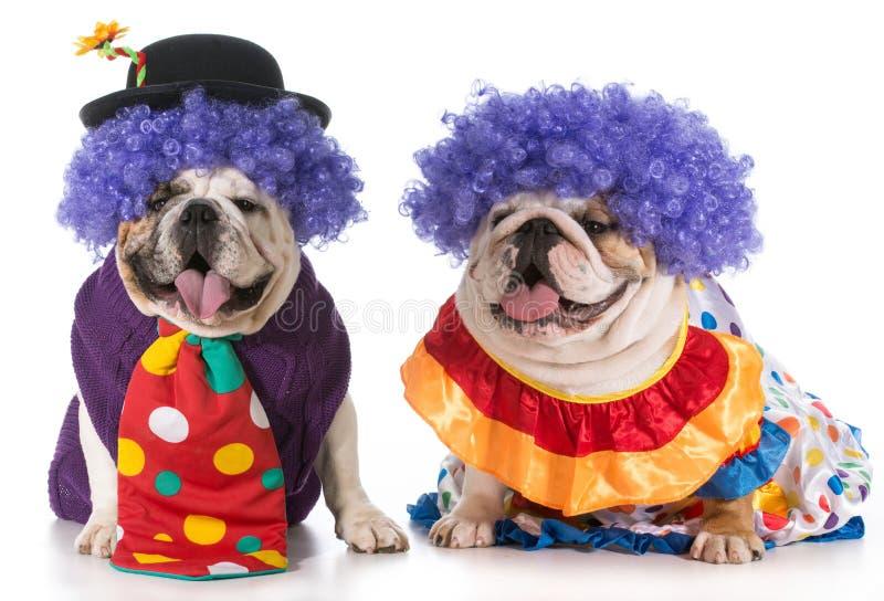 两条狗小丑 库存照片