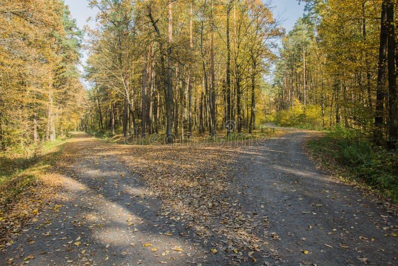 两条路在森林里 库存照片