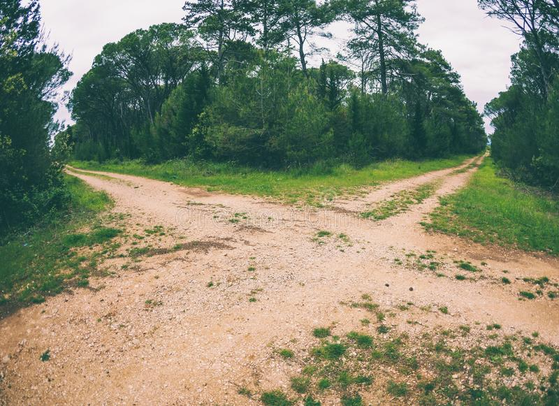 两条路的交叉点在森林里 免版税库存照片
